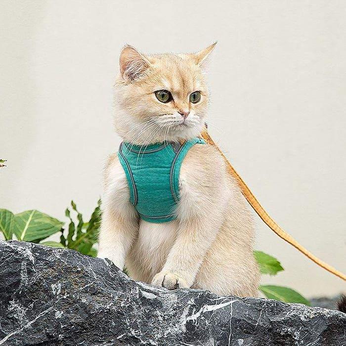 Dla bezpieczeństwa Twojego kociaka image
